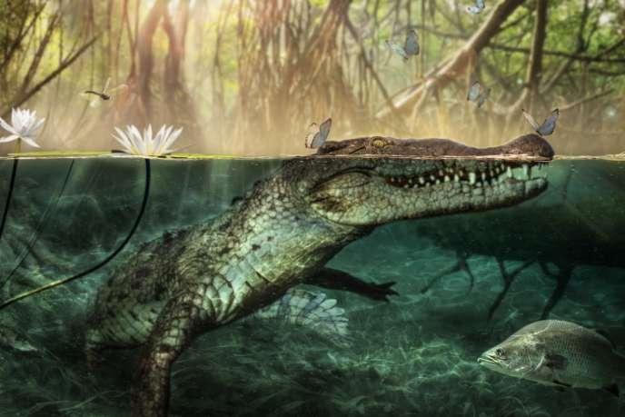 Reconstitution du «Crocodylus checchiai» par les chercheurs de l'Université de Pérouse, en Italie.