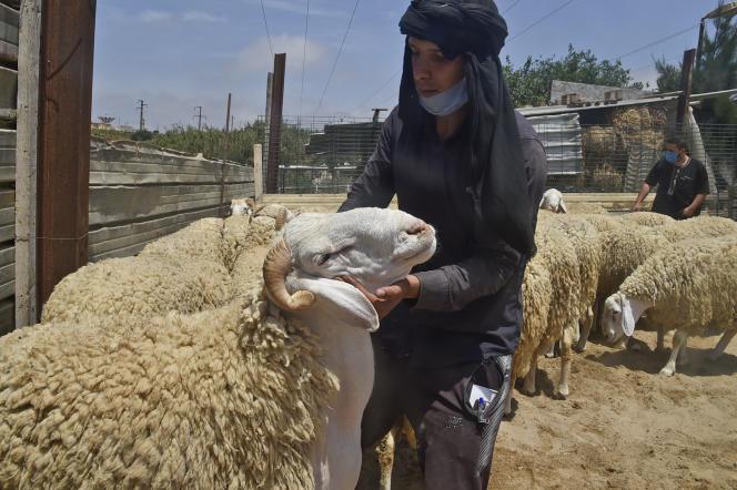 Marché aux bestiaux avant les célébrations de l'Aïd Al-Adha, à Alger, le 12 juillet.