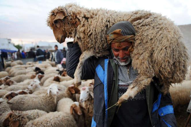 Tunisien transportant un mouton pour la fête de l'Aïd el-Adha, en novembre 2010.