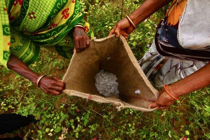 L'Inde produit déjà 47% du coton bio mondial, soit près de 90000 tonnes par an de coton fibre (la ouate débarrassée de ses graines).