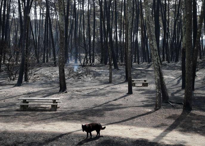 La forêt de Chiberta, le vendredi 31 juillet 2020.