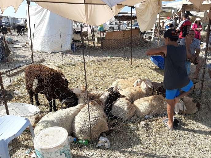 A Ariana, ville de la banlieue de Tunis, les clients sont rares cette année en cette veille d'Aïd et les moutons, plus chers à cause de la crise du coronavirus.