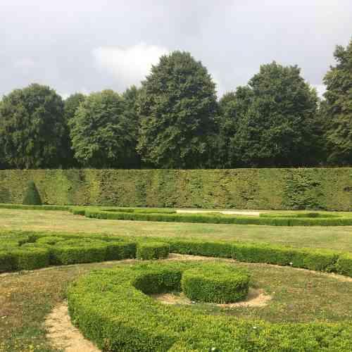 Emblématiques des jardins de Vaux et de leur création par André Le Nôtre, les parterres de buis, inspirés d'arabesques orientales, ont dû, pour la plupart, être arrachés. La faute en incombe à des maladies fongiques et à la chenille vorace d'un papillon, la pyrale... du buis.