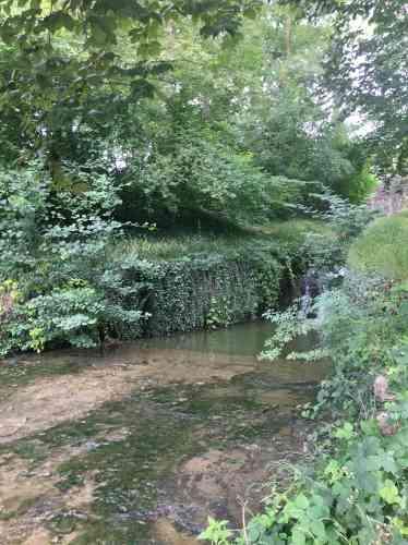 Un coin de« nature», dans un jardin où la géométrie est partout présente.