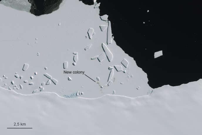 Les images satellites ont révélé la présence de déjections de manchots empereurs sur onze sites différents.