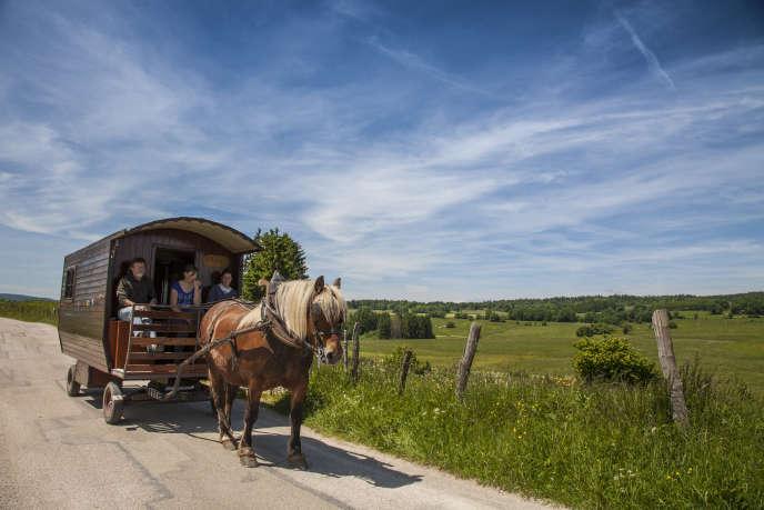 Un cheval de trait comtois tirant une roulotte de tourisme.