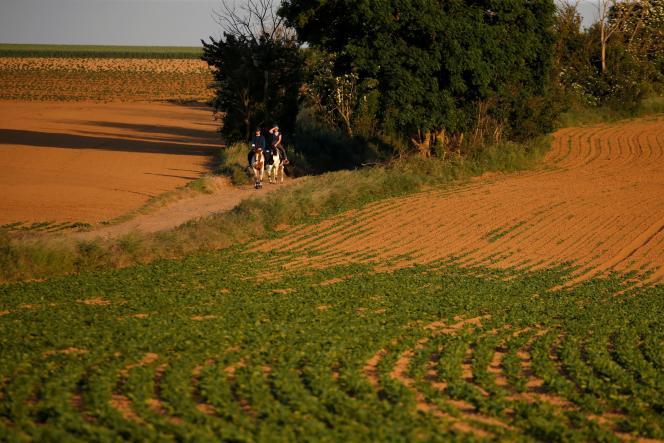 Un champ de betteraves à sucre, à Blécourt (Nord), le 25 mai.