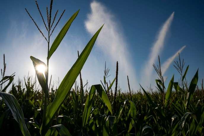 Un système d'arrosage dans un champ de maïs près d'Ensisheim, dans l'est de la France, le 7 août 2020.