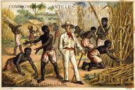 Récolte de la canne à sucre dans une plantation de la Compagnie des Antilles au XIXe siècle.