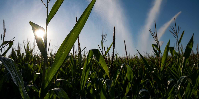 Un agriculteur intoxiqué, des cultures détruites : une exploitation bio détruite au glyphosate dans les Bouches-du-Rhône