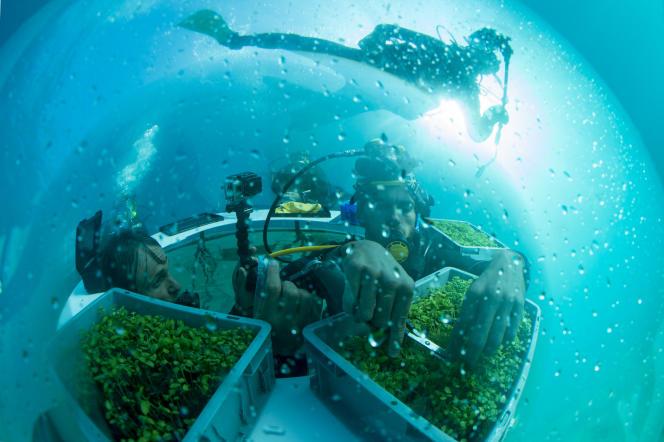 Projet écologique italien de biosphère immergée, à Noli (Italie), le 20 septembre 2015.