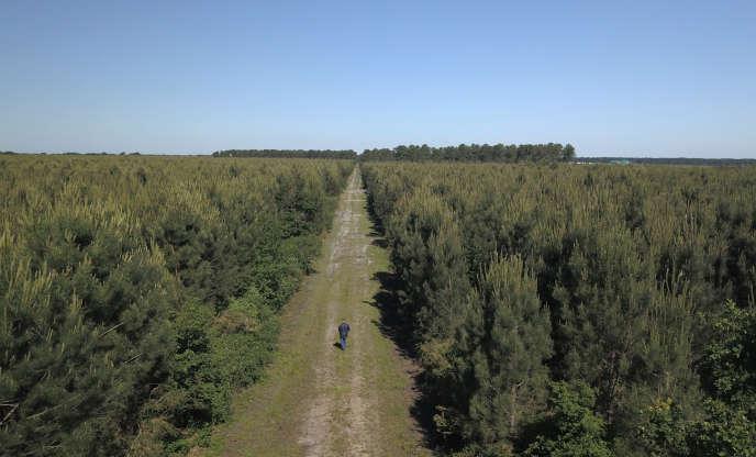 Vue aérienne de la plantation de pins communément appelée «forêt des Landes de Gascogne», près de Cestas (Gironde), en mai 2019.