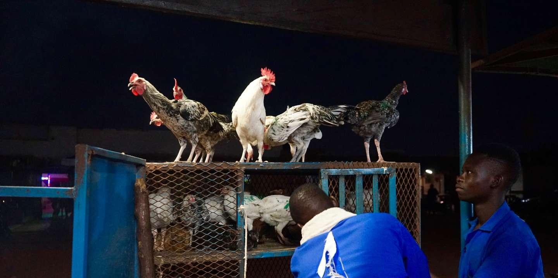 Au Burkina Faso, le « poulet bicyclette » à toutes les sauces