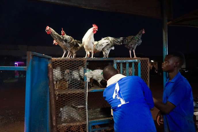 Les poulets d'Omar Guigma, boucher à Ouagadougou.