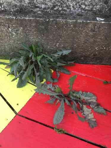 Des feuilles à mettre dans la salade ?