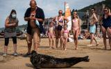 Tourists, some wearing a face mask, take a photo of a seal at the Houlgate beach, in Houlgate, north-western France, on August 8, 2020. / AFP / JOEL SAGET