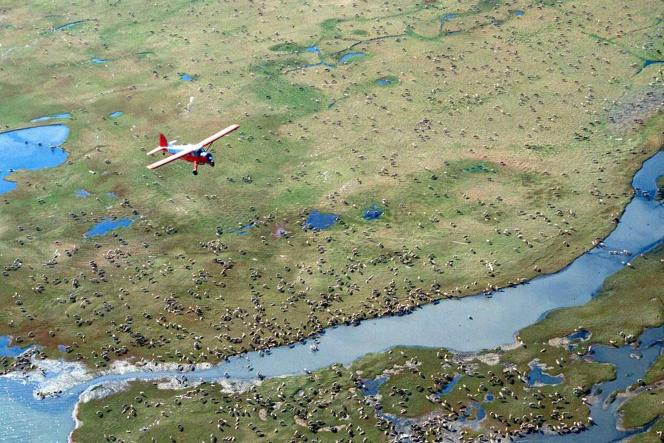 Un avion survole un troupeau de caribous dans l'Arctic National Wildlife Refuge, une aire protégée située au nord-est de l'Alaska (photo non datée fournie par le US Fish and Wildlife Service).