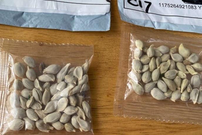 Exemples de graines reçues par un habitant de l'Etat de Washington, aux Etats-Unis.