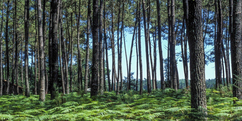 « Les communs fonciers peuvent servir de modèle pour relever les défis écologiques »