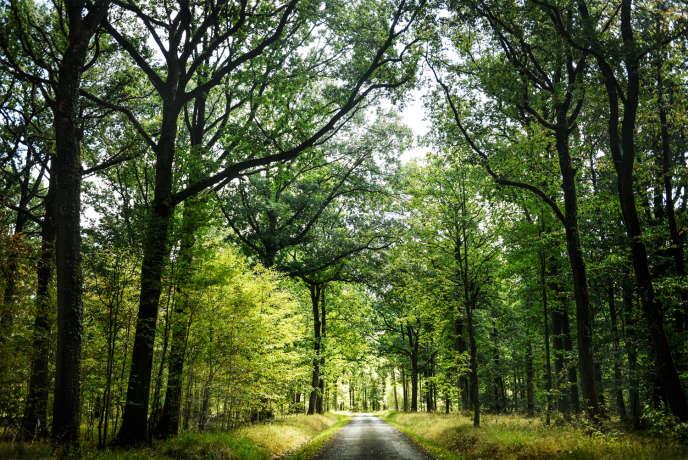 La forêt domaniale de Rambouillet.