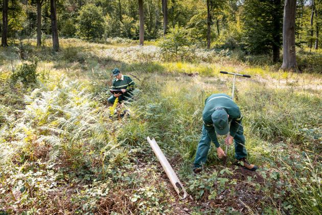 Prélèvement par l'ONF d'échantillons afin de voir l'évolution de la composition du sol, dans la forêt de Compiègne (Oise), le 2 septembre.