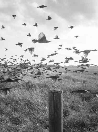 Le BritanniqueStephen Gilla planté un piquet dans un champ, sur lequels des oiseaux se posent. Une caméra fixée à proximité déclenche de façon aléatoire. Ces «autoportraits» de volatiles se retrouvent dans un verger de Vevey. Une image est aussi à voir sur une bâche géante qui épouse un mur de l'Hôtel des Trois Couronnes.