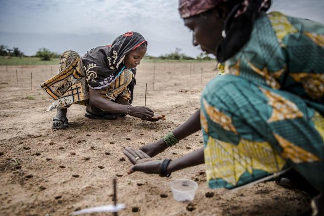 Des femmes plantent des graines dans le cadre d'un projet de plantation d'arbres pour reboiser le Sahel, à Malamawa (Niger), en juillet 2019.