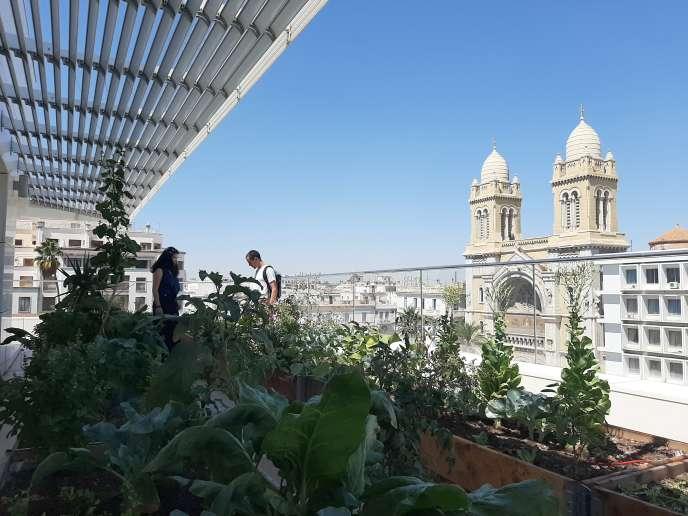L'un des potagers d'Urban Green sur le toit de la banque UBCI en plein cœur de la capitale tunisienne.
