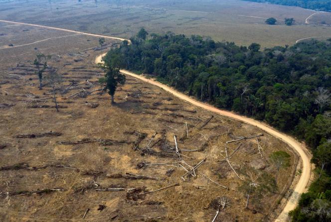 Vue aérienne d'une zone incendiée dans la forêt amazonienne, le 24 août 2019.