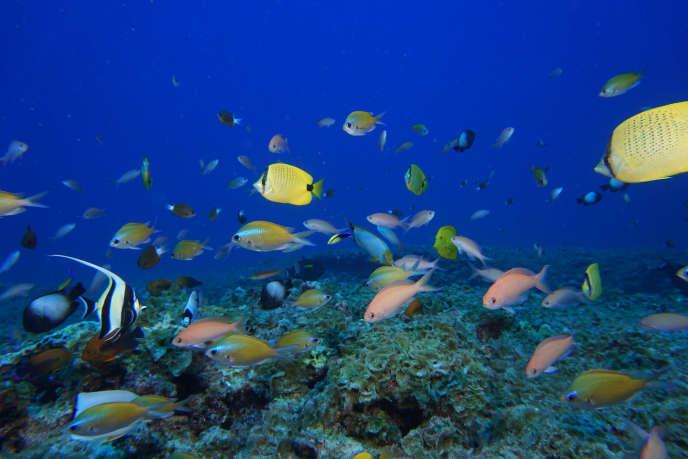 L'atoll de Pearl et Hermes, dans les îles hawaïennes du Nord-Ouest.