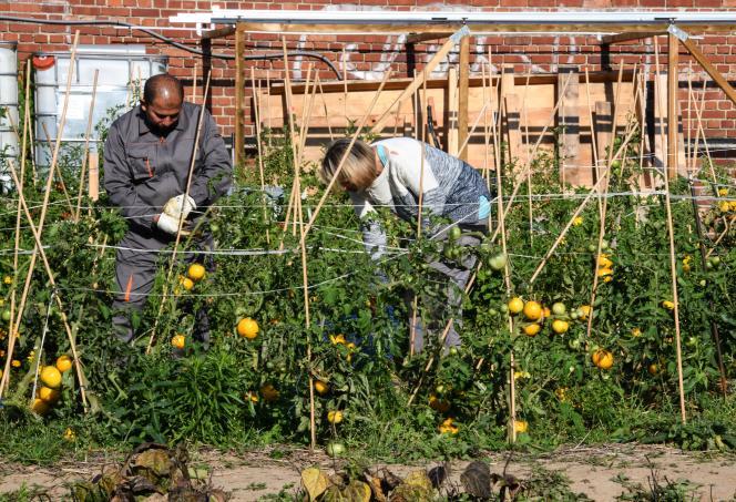 Des bénéficiaires de l'expérimentation «territoire zéro chômeur de longue durée» travaillent dans un jardin potager à Loos, près de Lille, en septembre 2018.