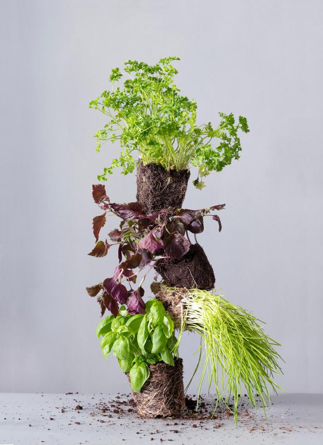 Herbes aromatiques.