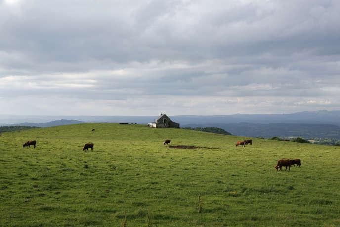 Entre le col de Néronne et Valette (pays de Salers), dans le Cantal.