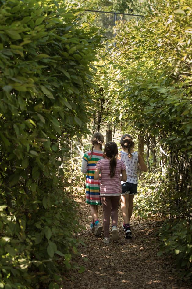 Trois fillettes se promènent dans le labyrinthe en haie de charmille, dans la cour de l'école élémentaire Reinhardswald, à Berlin, le 14 septembre.