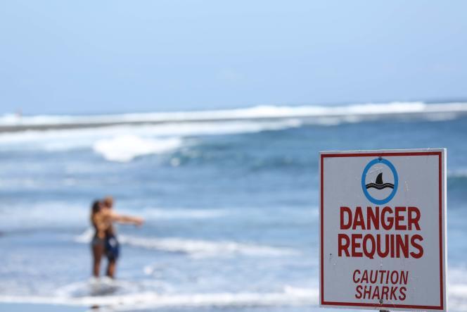 Un panneau indique« Danger requins» à Etang-Salé, à La Réunion, en 2013.