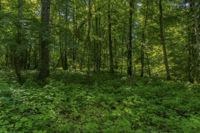 Sous-bois dans la forêt près de Passenans, dans le Jura, en France.