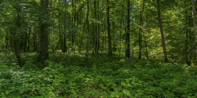 Polémiques sur le stock d'arbres des forêts européennes