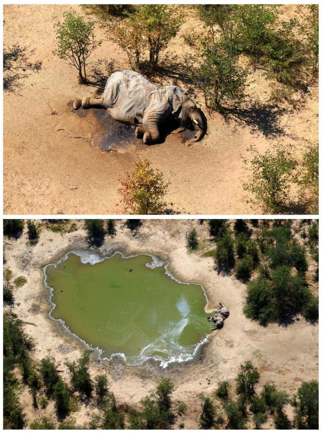 Delta de l'Okavango, au Botswana, en mai.