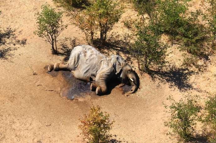 Un éléphant mort dans ledelta de l'Okavango, au Botswana, le 3 juillet 2020.
