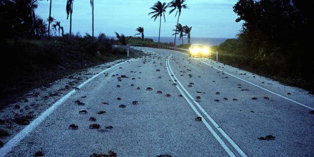 «L'Ile de Jacob», de Dorothée Janin: revenir à Christmas Island