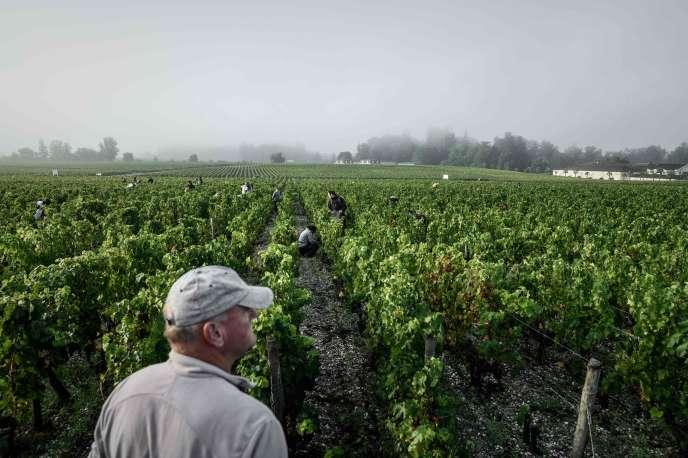 Pendant les vendanges dans un domaine viticole à Léognan (Gironde), le 23 septembre.