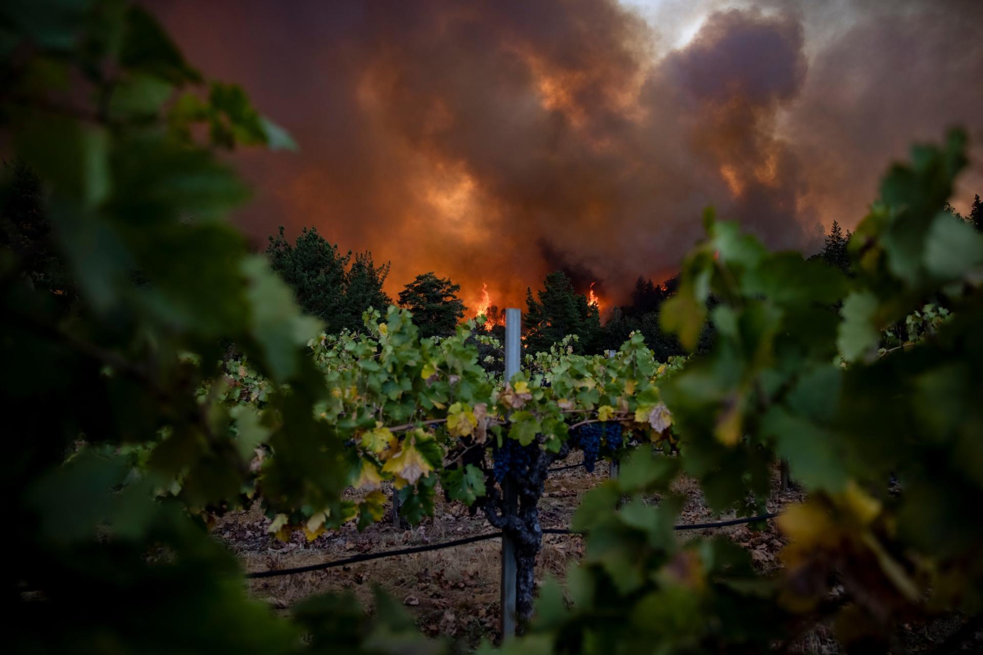 Le Glass Fire,derrière les vignobles de Merus Wines à Napa Valley, le 27septembre.