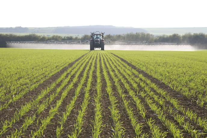 Pulvérisation de pesticides sur un champ de céréales en France.