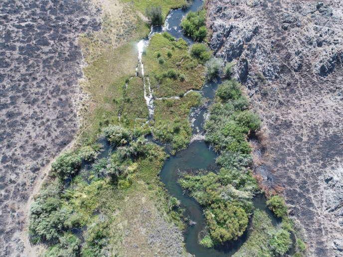 Barrage de castor dans un milieu humide de Baugh Creek (Idaho) dont les alentours ont été ravagés par les flammes cinq semaines plus tôt, en 2018. On aperçoit le barrage de castor au milieu du cours d'eau.