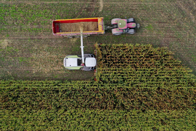 Récolte de maïs dans un champ près d'Arzal (Morbihan), le 28 septembre 2020.