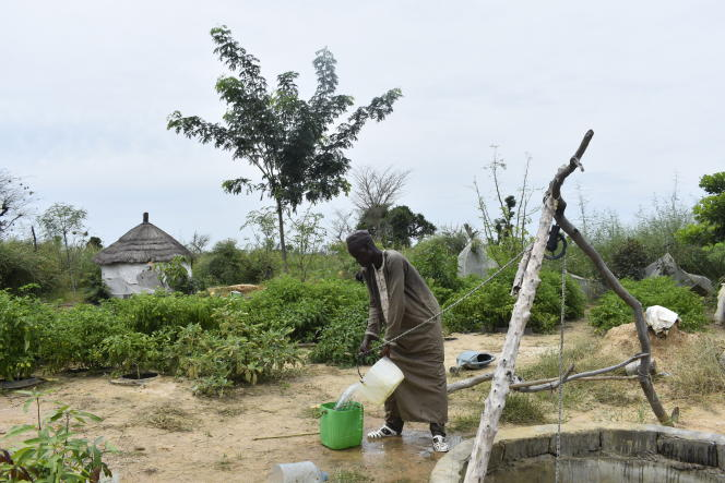 Grâce à son puits, Diatta Diouf arrose ses piments plantés dans des cuvettes de façon ciblée.