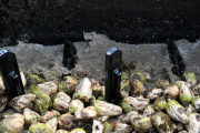 Dans une usine de transformation de la bettrave sucrière dans la Seine-et-Marne.