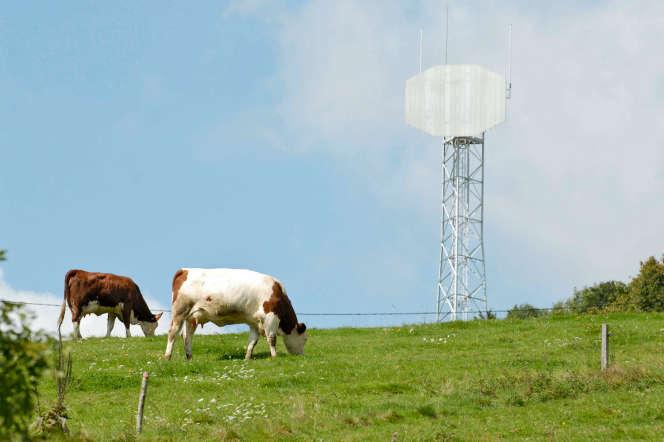 Des vaches paissent près d'une antenne relais de téléphonie, à Roybon (Isère).