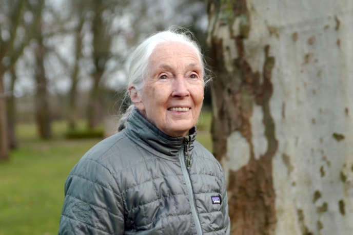 L'éthologue et anthropologue britannique Jane Goodall, âgée de 86 ans, a accordé un long entretien àInga Turczyn pour son documentaire.