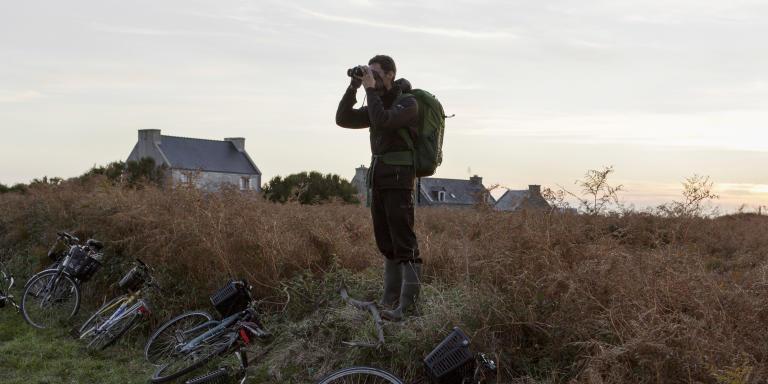 Ile de Ouessant, le 16 17 18 Octobre 2020.  A la saison desmigrations, les îles du Finistère assistent à un phénomène singulier. Débarqués de toute la France, des ornithologues s'y réunissent pour «cocher» des espèces rares: des oiseaux de Sibérie ou d'Amérique qui se sont trompés de couloir migratoire. Alertés par les réseaux sociaux des trouvailles réalisées, ils sont de plus en plus nombreux à s'y rendre et peuvent venir de l'autre bout de la France sur un coup de tête pour voir un Traquet isabelle ou un canard américain.   SUR LA PHOTO: Cocheurs à la recherche d'un Pouillot de Schwarz observé au  Lieu-dit